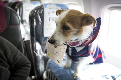 US rules only dogs count as service animals on planes