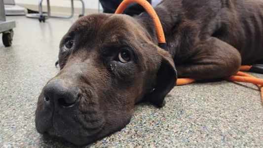 Dog found severely emaciated in Butler County; authorities seek owner