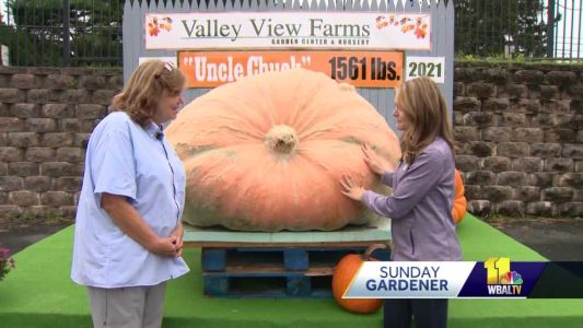 Sunday Gardener: Return of giant pumpkin seed guessing contest