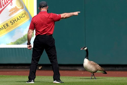 Angry goose wanders onto field during Cubs game - and refuses to leave