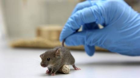 Swiss scientists discover two new cell types in mouse brains, giving insight on brain repair mechanisms