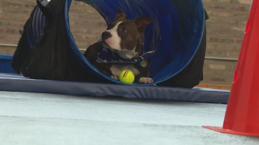 Bosly's Backyard allows indoor play space for dogs
