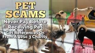Pet scams on the rise as adoptions skyrocket amid pandemic
