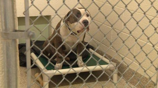 BARCS full for first time since beginning of pandemic and looking for fosters