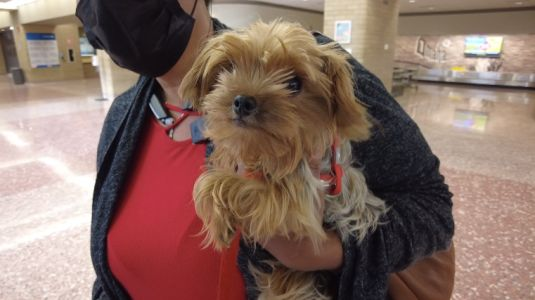 Teacup terrier stolen in California, found and reunited with owner in Omaha