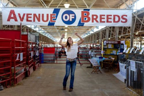 Iowa State Fair officials look at axing Avenue of Breeds this year