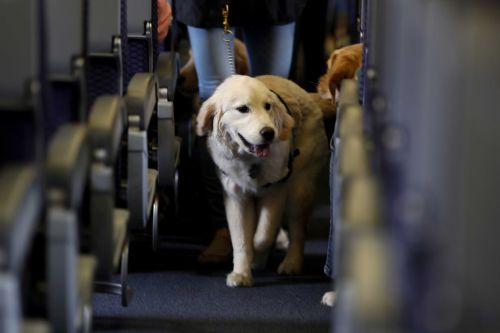 Emotional support animals on airlines get their wings clipped
