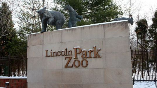 Lincoln Park Zoo reopens this weekend