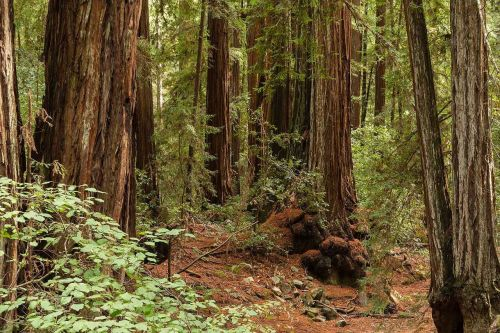 CA State Parks close vehicle access to all 280 sites as visitation surges