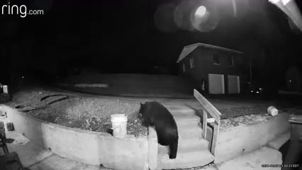 Bear caught on camera outside Forward Township home