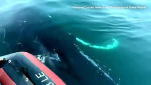 Watch Now: Humpback whale 'mugs' boat off California coast, and more of today's top videos
