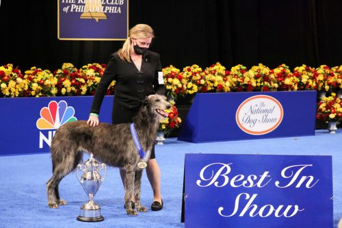 National Dog Show 2020: Scottish Deerhound wins Best in Show