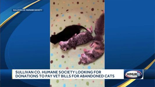 Humane society seeks donations after cat, kittens abandoned