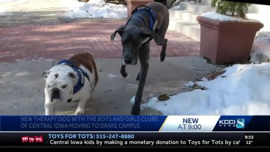 Griff the bulldog joined by new four-legged friend at Drake University