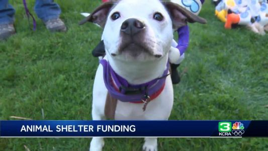 Why animal advocates say California shelters need more funding
