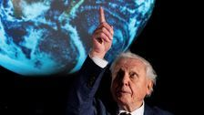 David Attenborough Says Climate Change Is A 'Crime' Humanity Has Inflicted On The Planet