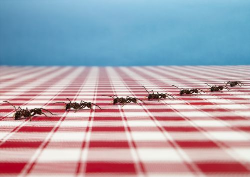 These expert-approved DIY traps will actually kill ants in your home