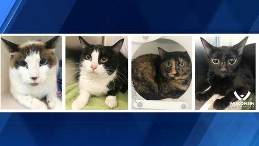 Wisconsin Humane Society looking for people to adopt working cats