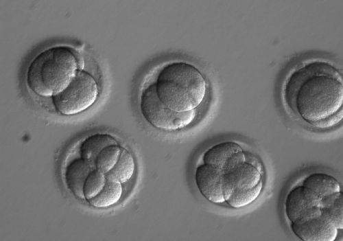 California jury awards $15 million to victims after a storage tank malfunction destroyed embryos