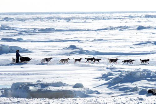 Couple flees to north of the Arctic Circle in bid to escape Covid-19