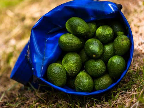 Mission Produce's CEO thinks the produce company can bounce back from today's 'disappointing' IPO by winning over Europe with its famous Haas avocados