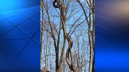 Large snake spotted on Frick Park trail