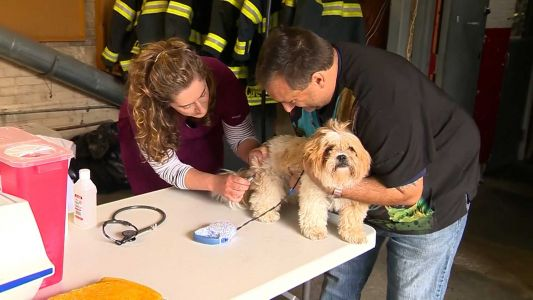 Officials in Mass. city offer affordable rabies vaccine clinic for pets
