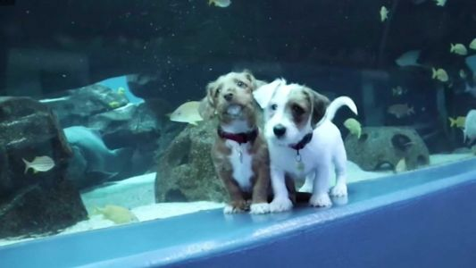 VIDEO: Aquarium closed due to the coronavirus welcomes shelter puppies for visit