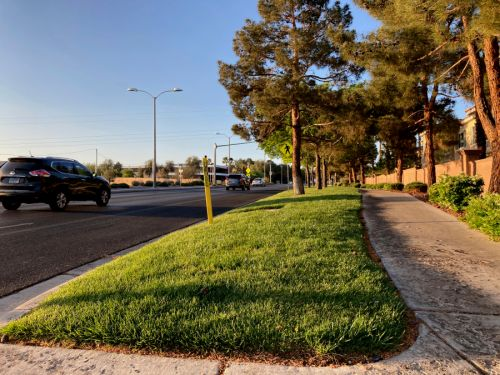 Las Vegas pushes to become first to ban ornamental grass
