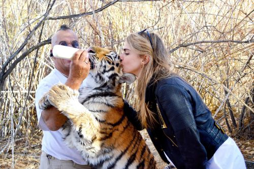 PETA requests celebrities cease posing with wild animals after 'Tiger King'