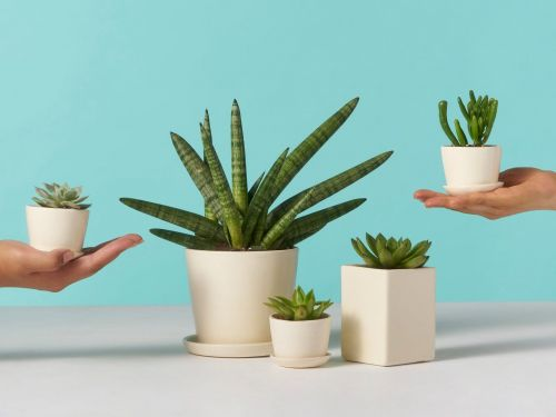 Plant DTC companies like The Sill, Horti, and Bloomscape are seeing surging demand as other DTC companies are stumbling. 3 CEOs talk about having a front-row seat for the houseplant boom