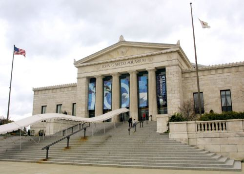 Shedd Aquarium to offer 12 free days in October to Illinois residents
