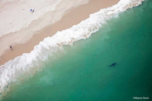 Cape Cod beach closed after confirmed shark sighting, attack on seal