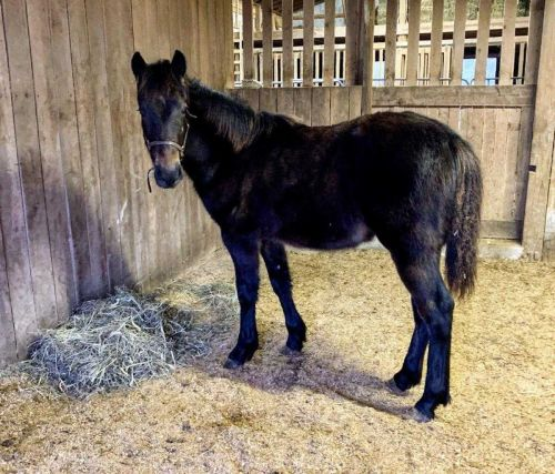 Surviving colt from eastern Kentucky horse killings ready for adoption