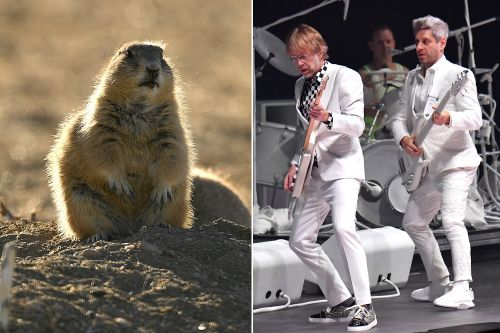 Plague-ridden prairie dogs force cancellation of Phish camping event