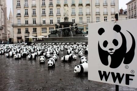 Wildlife on the Way Out While the World Wildlife Fund Lays a Policy Egg