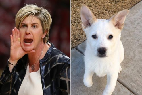 Texas Tech's Marlene Stollings 'toxic' culture included confiscating player's dog