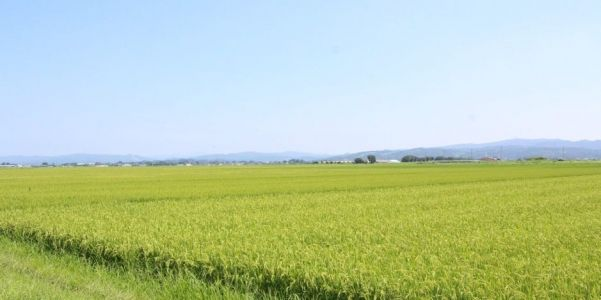 Japanese rice farmers reach out to the world with eco-friendly, smart-farming production