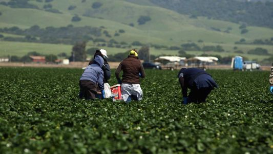 House votes to provide pathway to citizenship for thousands of undocumented farmworkers