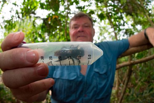 Thought to be extinct, world's largest bee spotted for first time in nearly 4 decades