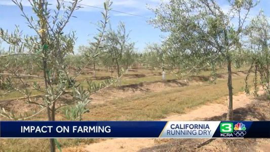 Running Dry: How a California olive grower is adapting to drought conditions
