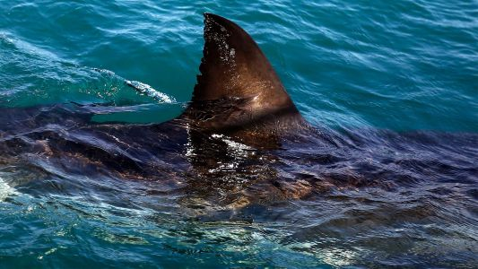 No swimming order issued for Cape Cod beach after confirmed shark sighting