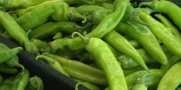 NASA: Hatch chiles show success in space