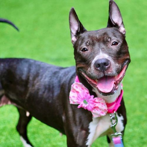 City pound 'close' to capacity, as New Yorkers return pandemic pets