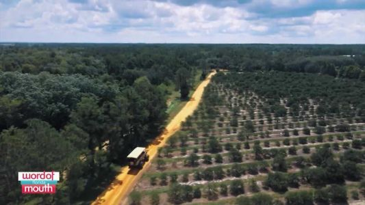 Word of Mouth Florida: Showcase of Citrus in Clermont