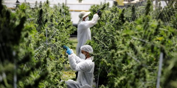Harvest Health surges 19% after Trulieve acquires the cannabis company for $2.1 billion in stock