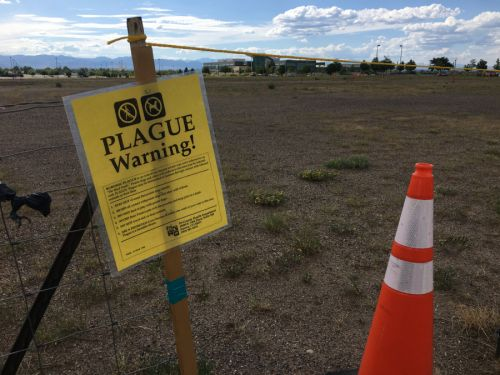 Plague discovered in 6 Colorado counties after 10-year-old dies