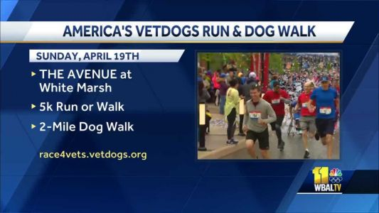 Help support dogs like Brooks at VetDogs run