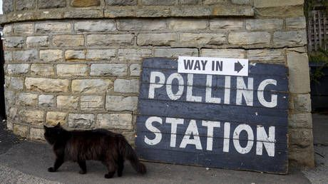 'Hey dogs, we want some of the action': Canines' feline rivals in UK strike back as catsatpollingstations trends on election day