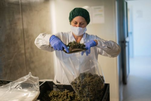 Insider Cannabis: Marijuana on the ballot - Aurora gets a new CEO - Wall Street stops testing for weed